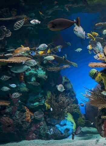 кораллы - из Спб